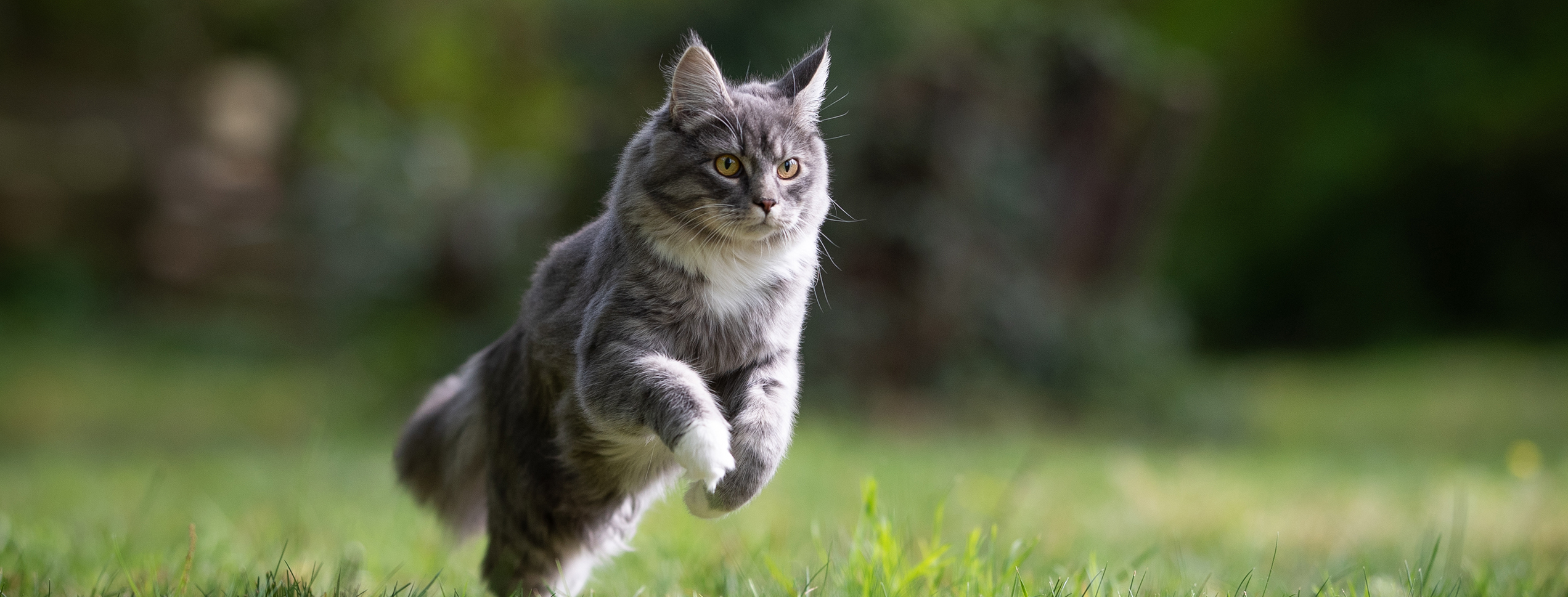 Orange cat walking down dirt path