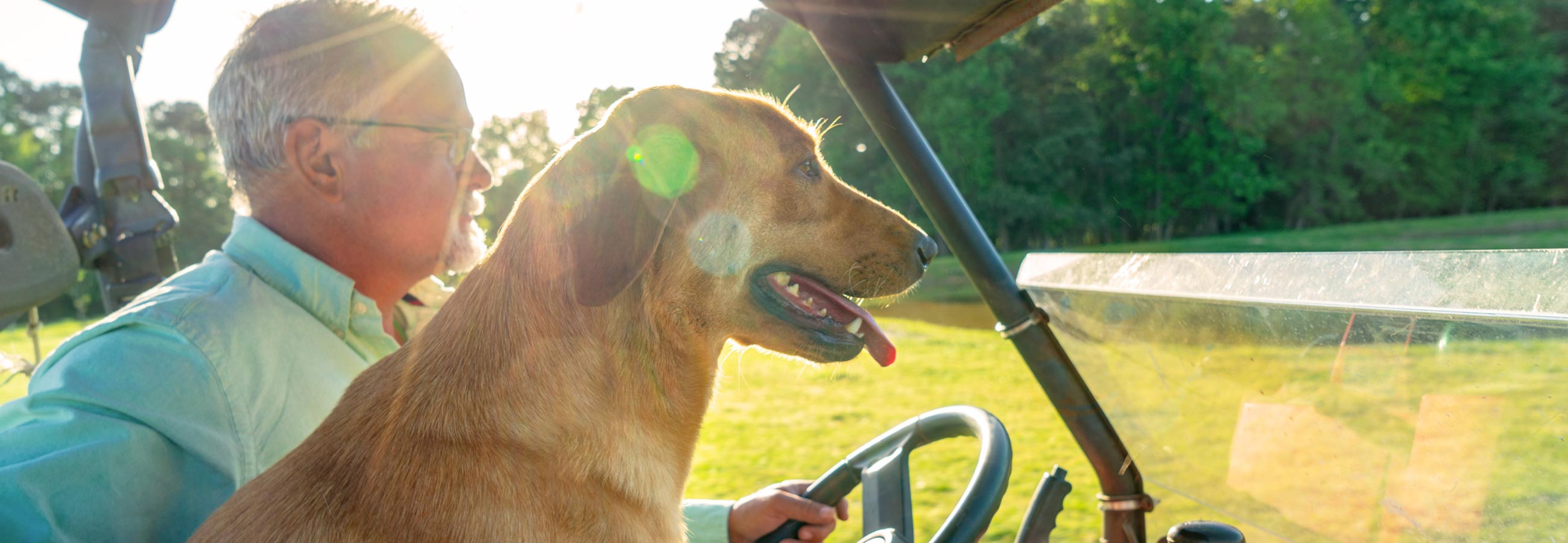Dog trainer Curtis Treadway riding in golf cart with lab