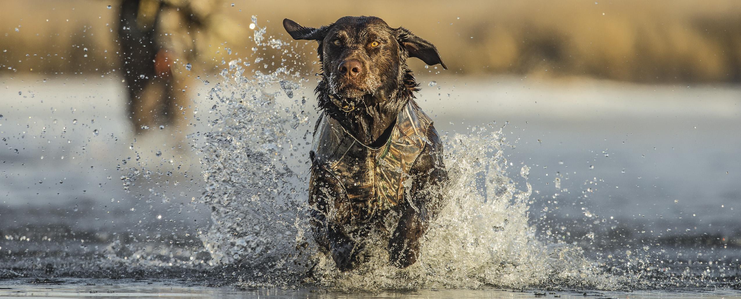 Camo Duck Dog